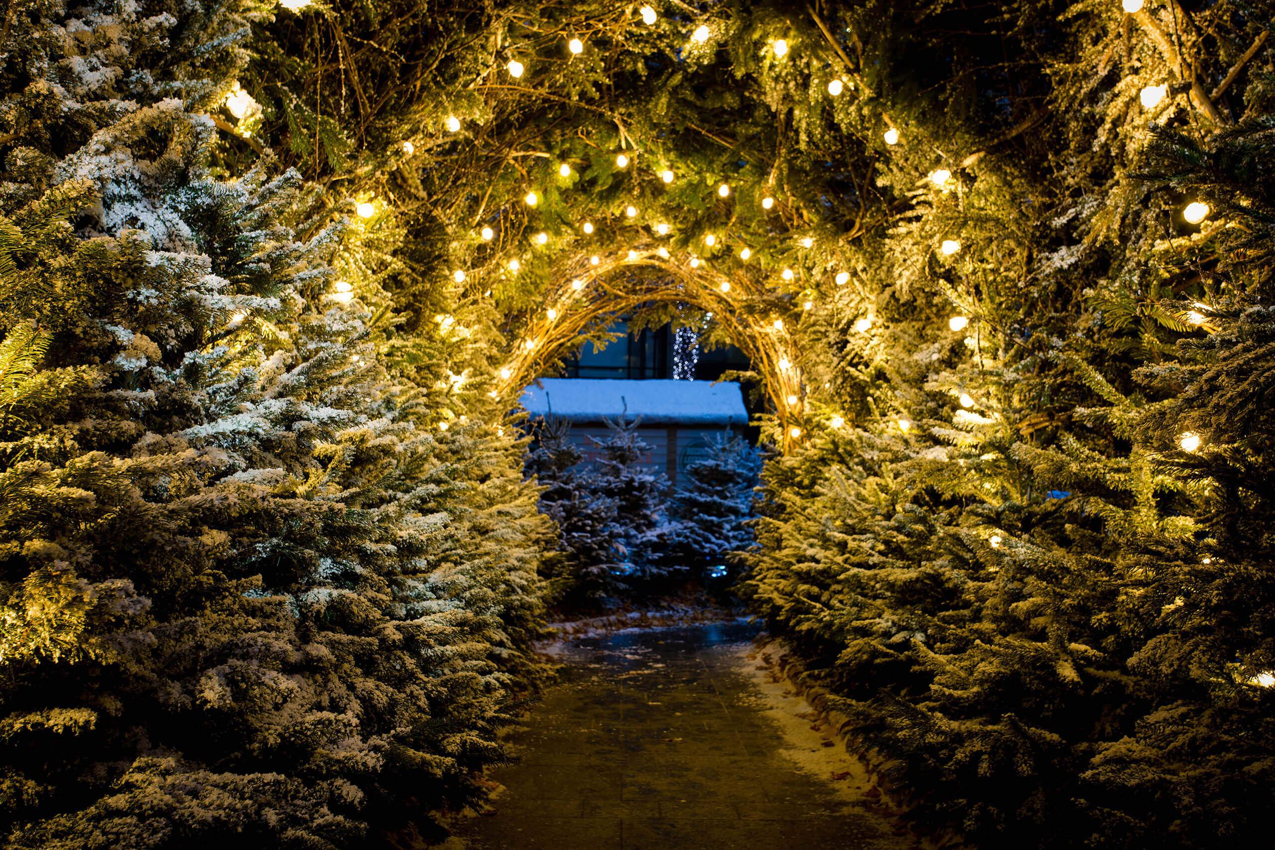 Broadgate-Winter-Forest-119